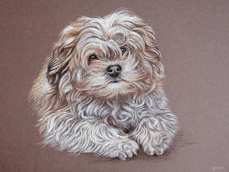 Hund, Pastellmalerei, Tierportrait, Zeichnungen, Tiere,