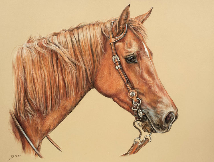 Pastellmalerei, Pferde, Pony, Fuchs, Quarter horse, Stute