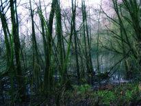 Geheimnisvoll, Romantisch, Natur, Baum