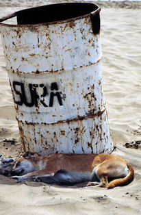 Playa, Strand, Hund, Gran canaria