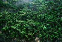 Steilküste, Süden, Thailand, Baumbewuchs