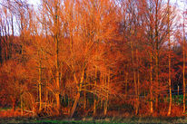 Wald, Dämmerung, Herbst, Gehölz
