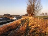 Winter, Dämmerung, Baum, Kanal