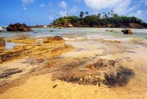 Insel, Felsen, Strand, Sri lanka