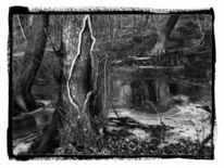 Gehölz, Teich, Winter, Baum