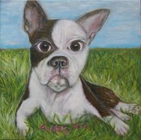 Boston terrier, Wiese, Awesome, Hund