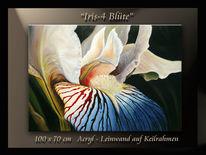 Blau, Blumen, Irisblüte, Natur