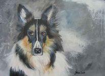 Collie, Blöder hund, Hund, Tiere