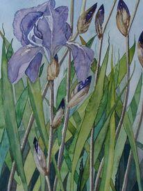 Malters, Wasserpflanze, Luzern, Iris