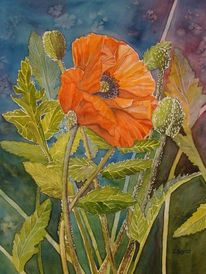 Mohn, Mai, Orange, Blumen