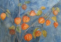 Physalis, Malters, Luzern, Orange