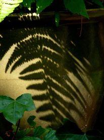 Blumentopf, Farne, Pflanzkübel, Schatten