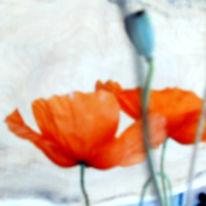 Sommer, Mohn, Rot, Fotografie