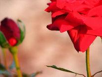 Rot, Liebe, Fotografie