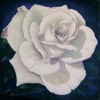Rose, Weiß, Malerei, Pflanzen