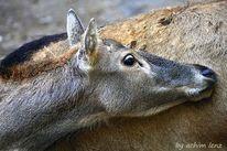 Tiere, Fotografie, Zoo