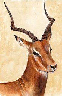 Horn, Impala, Wild, Afrika