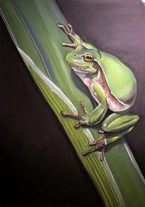 Grün, Sitzen, Frosch, Hüpfen