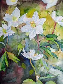 Buschwindröschen, Frühlingsaquarell, Anemonen, Aquarellmalerei
