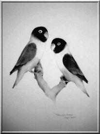 Bleistiftzeichnung, Agapornis, Vogel, Natur