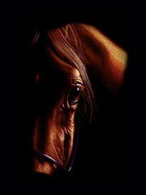 Pferde, Dekoration, Jüngling, Pferdeauge