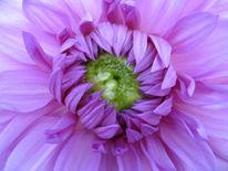 Blüte, Makro, Blumen, Fotografie