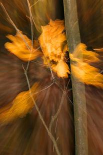 Lichtmalerei, Verwischen, Herbstblätter, Lightpainting