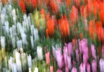 Lightpainting, Blumen, Verwischen, Wischeffekt