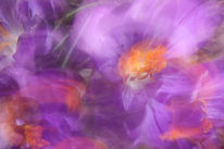 Lichtmalerei, Springtime, Farben, Lightpainting