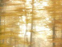 Tief, Licht, Flut, Herbst