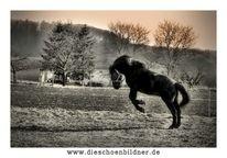 Winter, Pferde, Sprung, Weide