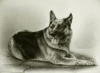 Realismus, Bleistiftzeichnung, Portrait, Hund