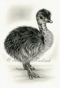 Vogelstrauß, Realismus, Küken, Bleistiftzeichnung