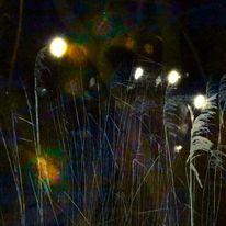 Leuchten, Flirren, Licht, Schilf