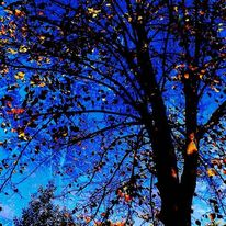 Hagebutte, Blau, Leuchten, Baum