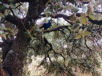 Zweigeäste, Pfau, Baum, Laub