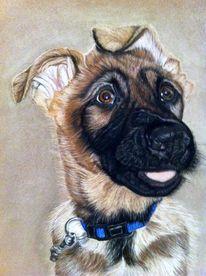 Zeichnung, Pastellmalerei, Hundeportrait, Malerei