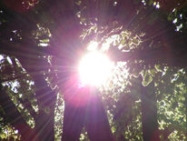 Sonne, Abend, Mai, Fotografie