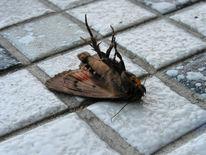 Tod, Insekten, Absturz, Gefahr