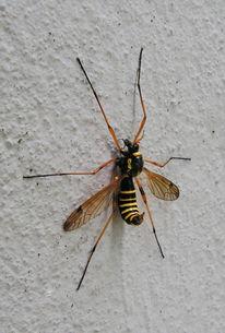 Ende, Insekten, Wand, Fotografie