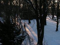 Winter, Park, Eis, Schnee