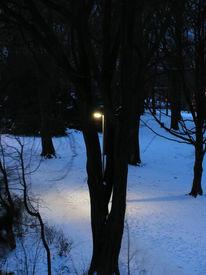 Park, Baum, Laterne, Fotografie