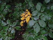 Vorgeschmack, Ulmenschicksal, Herbst, Fotografie