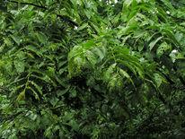 Blätter, Ulme, Wachsen, Fotografie