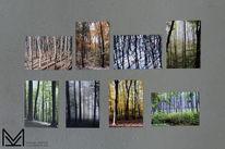 Baum, Fotografie, Postkarte,