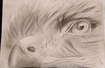 Greifvogel, Zeichnungen, Portrait, Schwarz