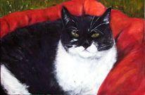 Platz, Müde, Katze, Rot schwarz