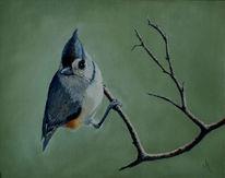 Titmouse, Wildlife realistisch, Realismus, Indianermeise