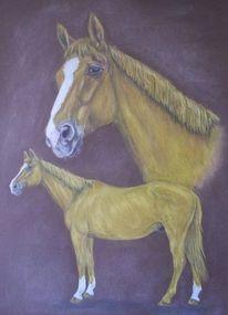 Pferde, Portrait, Zeichnung, Zeichnungen