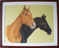 Zeichnung, Pferde, Portrait, Zeichnungen
